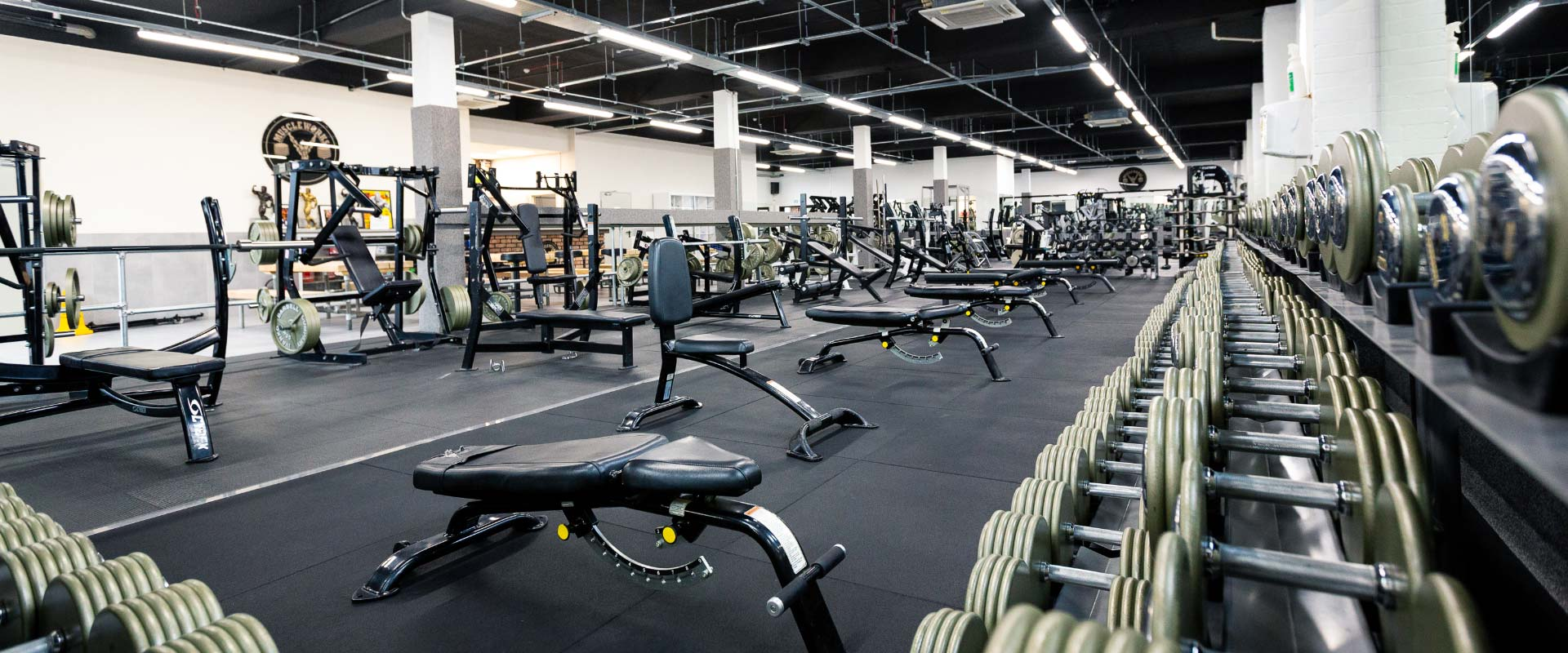 Gym Freeweights Area